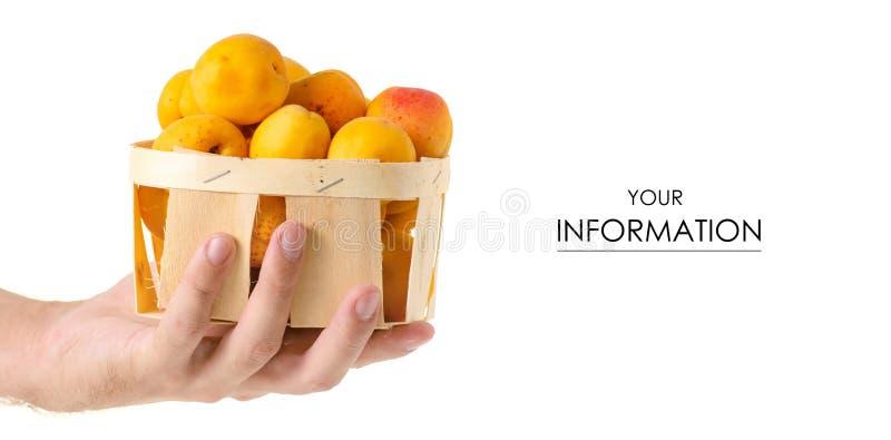Morele w koszykowej pomarańczowej owoc w ręka wzorze zdjęcie stock