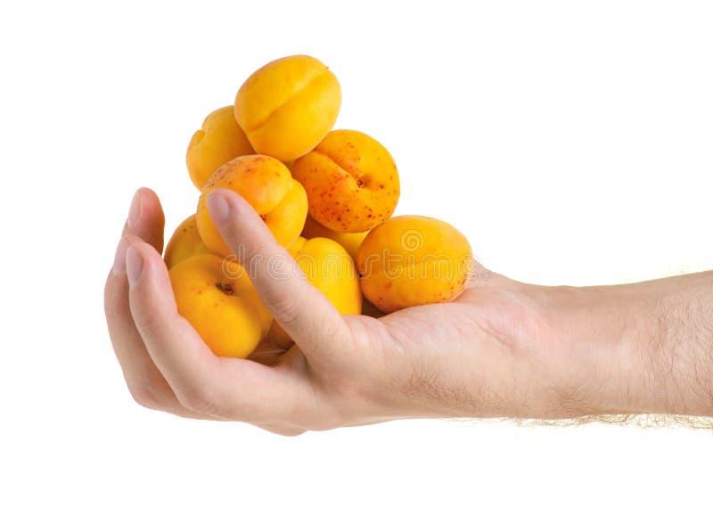 Moreli pomarańczowa owoc w ręce obraz stock
