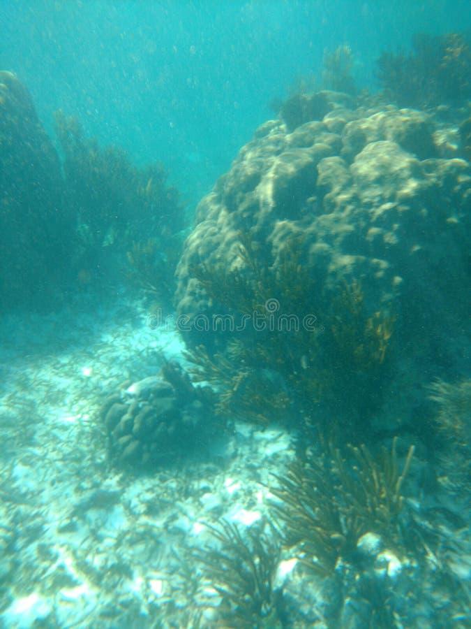 Morelos Messico di Puerto della barriera corallina immagine stock