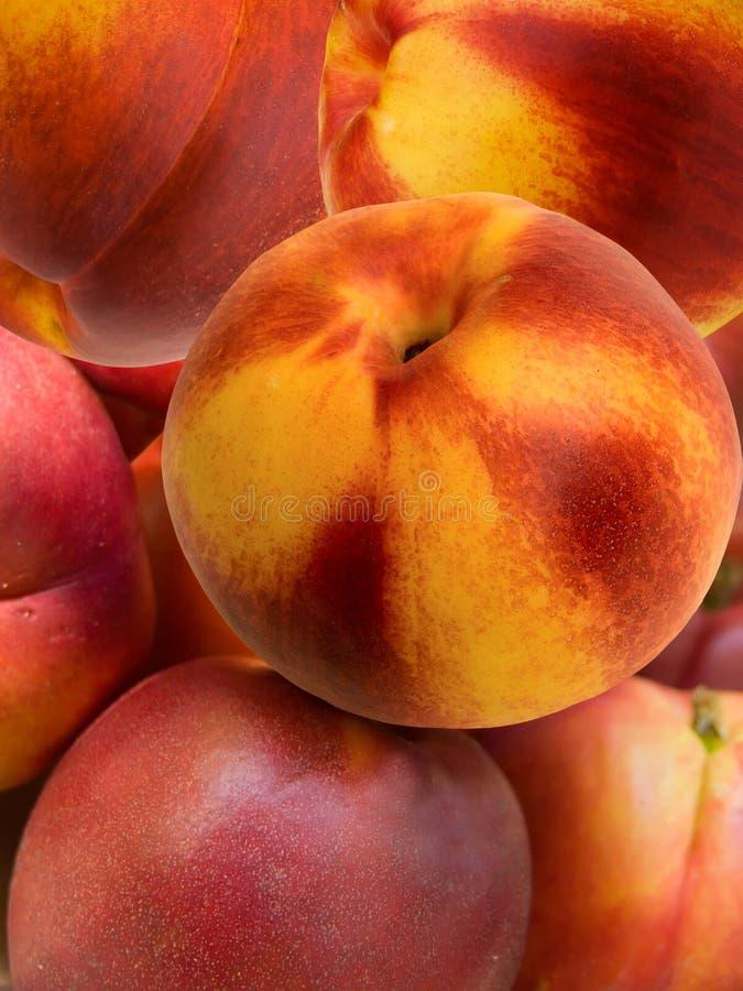 morelowa świeżej owoc hybrydu brzoskwinia fotografia royalty free