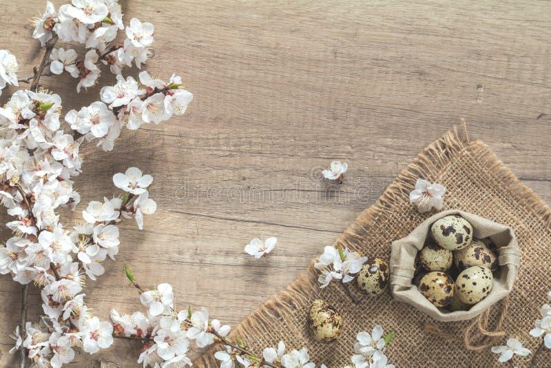 Morelowego drzewa okwitnięcia przepiórki i gałąź jajka w torbie obraz stock