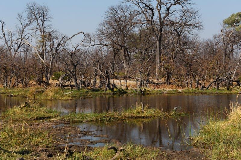 Moremi game reserve landscape. Beautiful landscape in the Okavango swamps, Moremi game reserve landscape, Okavango Delta, Botswana royalty free stock photos