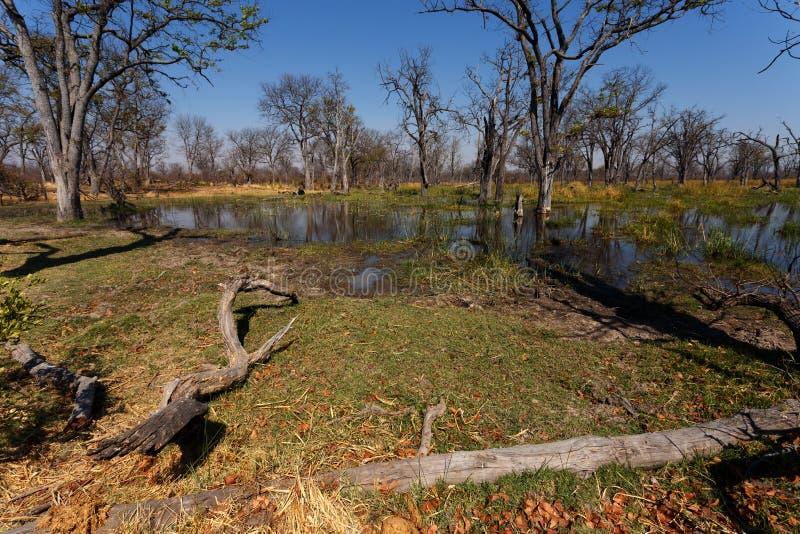Moremi game reserve landscape. Beautiful landscape in the Okavango swamps, Moremi game reserve landscape, Okavango Delta, Botswana royalty free stock images