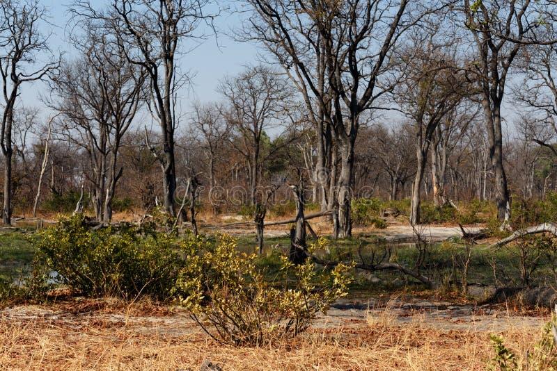 Moremi game reserve landscape. Beautiful landscape in the Okavango swamps, Moremi game reserve landscape, Okavango Delta, Botswana stock photo