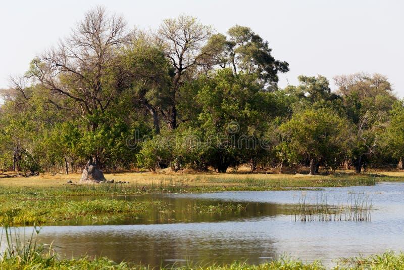 Moremi game reserve landscape. Beautiful landscape in the Okavango swamps, Moremi game reserve landscape, Okavango Delta, Botswana stock images