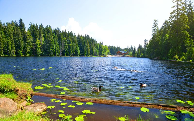 Morena jeziorny Grosser Arbersee, Niemcy fotografia stock