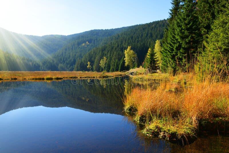 Morena jeziorny Kleiner Arbersee w parka narodowego Bawarski forestGermany zdjęcie stock