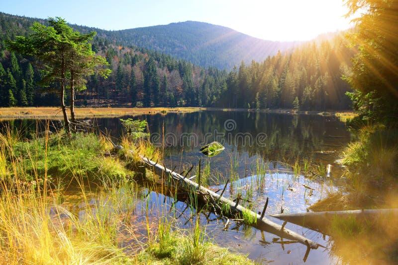 Morena jeziorny Kleiner Arbersee w parka narodowego Bawarskim lesie, Niemcy zdjęcie royalty free
