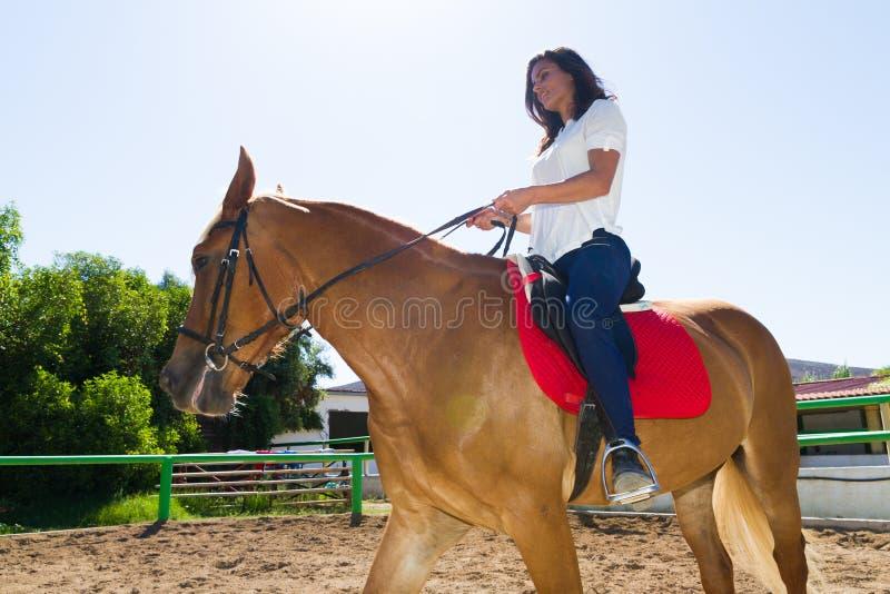 Morenita joven en un caballo marrón-rubio en el club del montar a caballo fotos de archivo