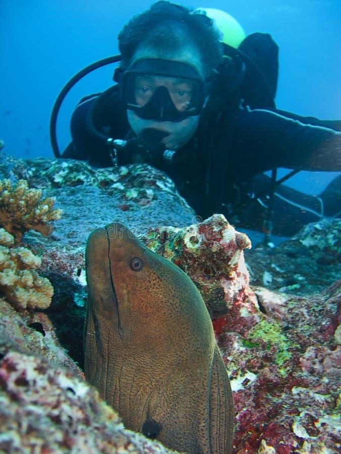 Morey e mergulhador fotos de stock royalty free