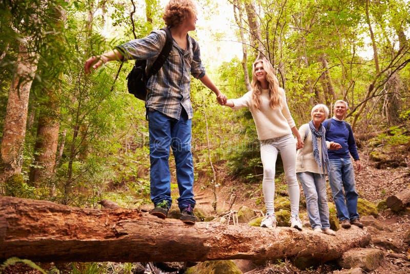 Morföräldrar och tonår som går på ett stupat träd i en skog arkivbilder