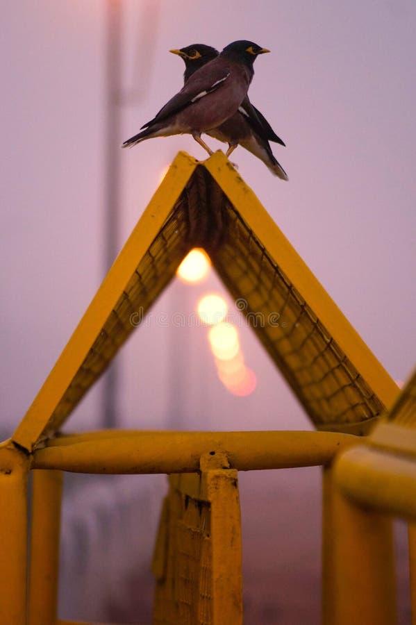 Morgen-Ansichten von den Vögeln, die auf Sperren sitzen stockbilder
