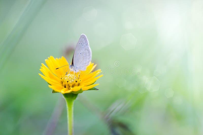 Morgen auf Natur und flatterndem Schmetterling auf dem weichen grünen Hintergrund, Makro ENV 8 lizenzfreie abbildung