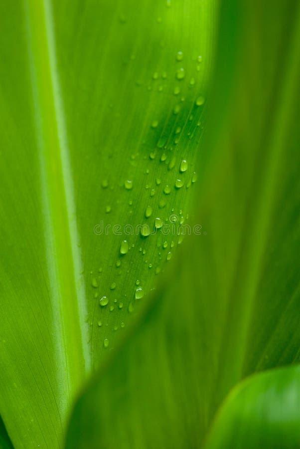 Morgen befeuchtet auf tropischen Blumen stockbild