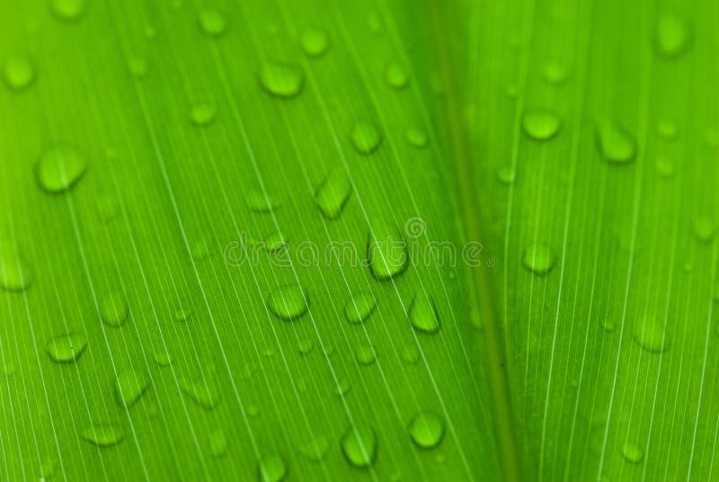 Morgen befeuchtet auf tropischen Blumen lizenzfreie stockfotografie