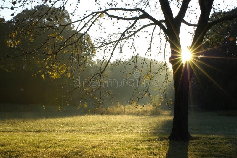 Morgen durch den Walnuss-Baum stockfoto
