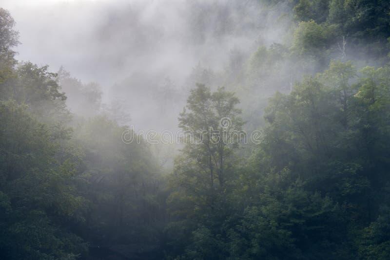 Morgen für auf grünen stillen szenischen Wald stockfotos