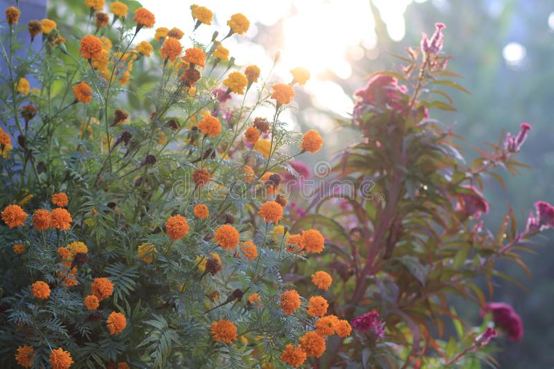 Morgen im Garten lizenzfreies stockbild