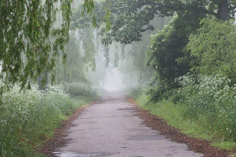 Morgen im Garten unter den Weiden nebel stockbild