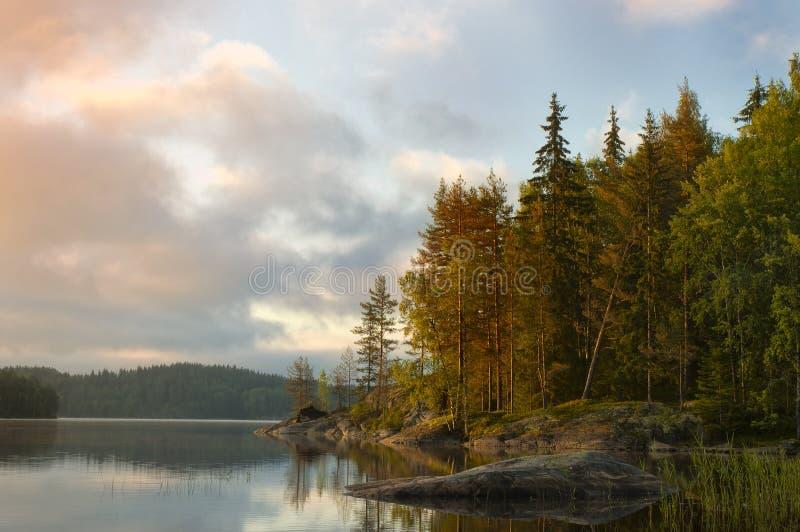 Morgen im Küstenwald. stockfotografie