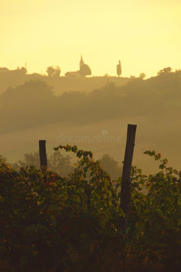 Morgen im Weinberg, Slowenien lizenzfreies stockfoto