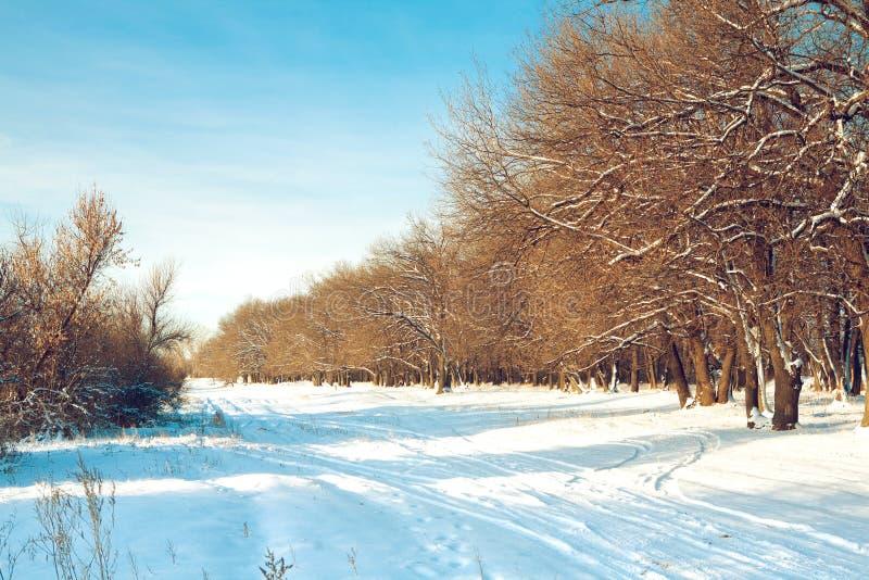 Morgen im Winter stockbild