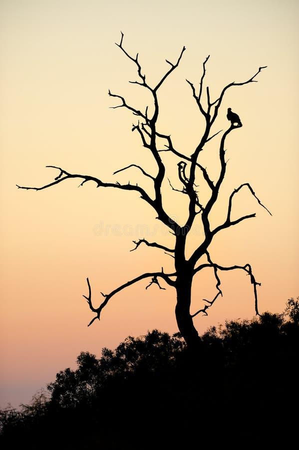 Morgen Silhouetter stockfotografie