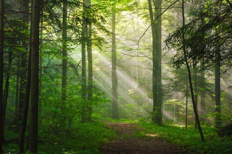 Morgen-Sonnenlicht stockfoto