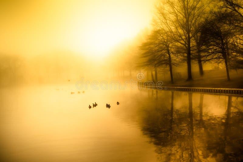 Morgen-Teich stockbild