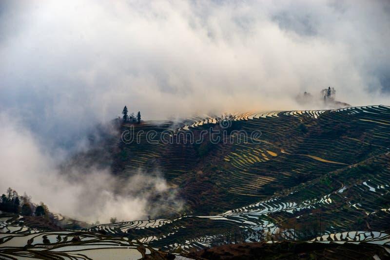 Morgen von Terrassen in Duoyishu stockbilder