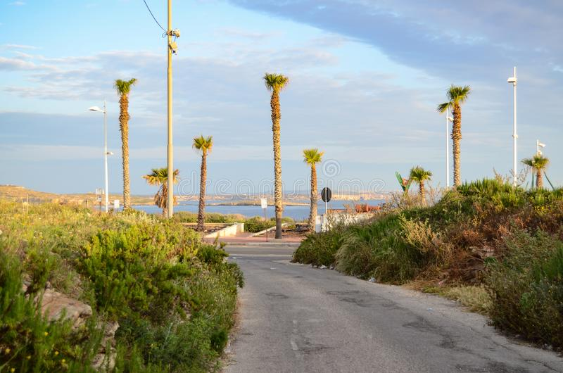 Morgenansicht der kleinen Straße führend zu Seeküste auf Malta mit blauem Himmel und vielen Palmen lizenzfreie stockbilder