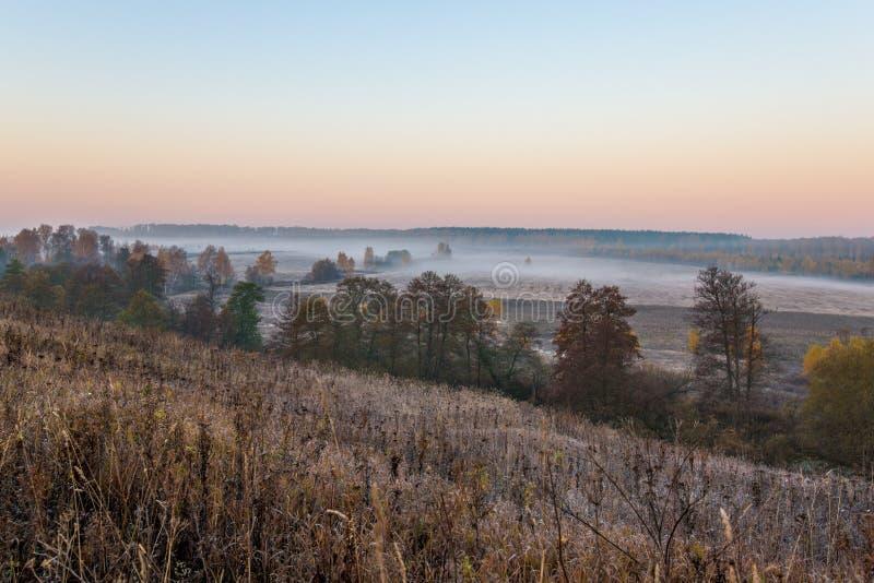 Morgenfluß im Wald lizenzfreies stockfoto