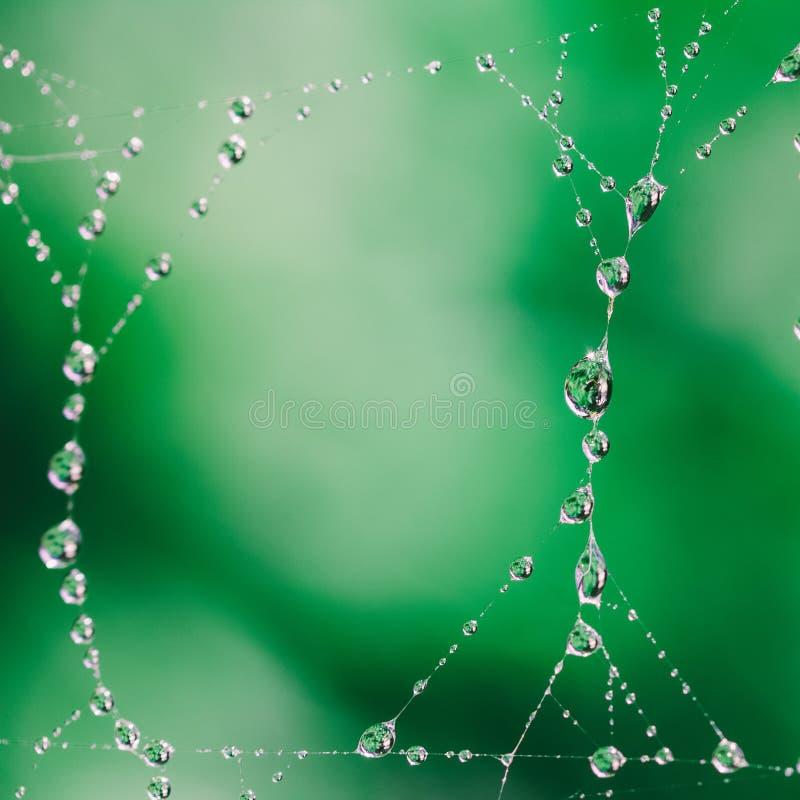 Morgenfrühling oder Sommertau auf einem Spinnennetz lizenzfreie stockfotografie