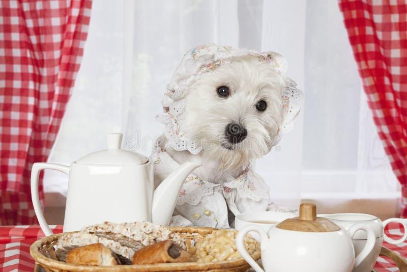 Morgenfrühstück stockfoto