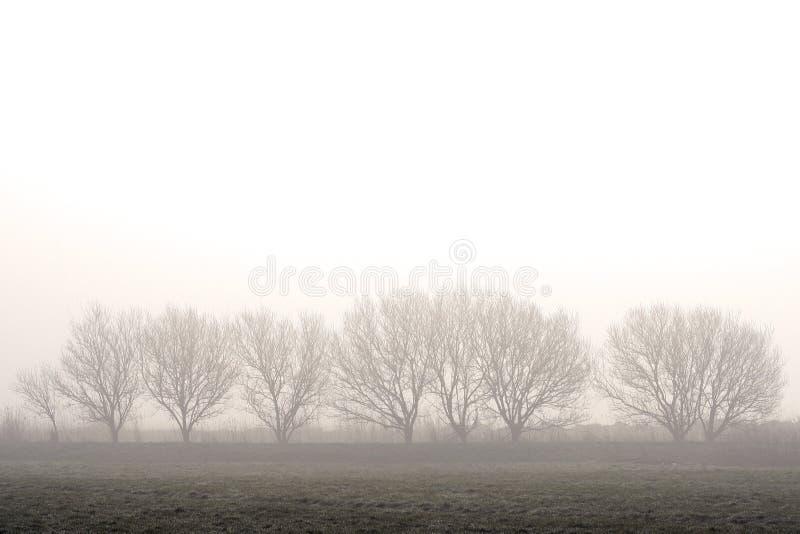 Morgenfrieden stockbilder