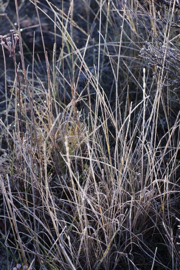 Morgenfrost auf dem Gras stockbild