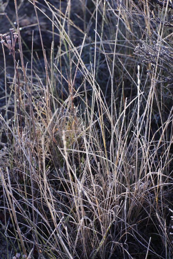 Morgenfrost auf dem Gras stockfotografie
