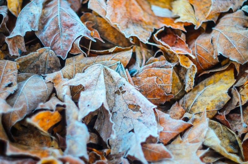 Morgenfrost auf trockenen Blattblättern lizenzfreie stockfotos