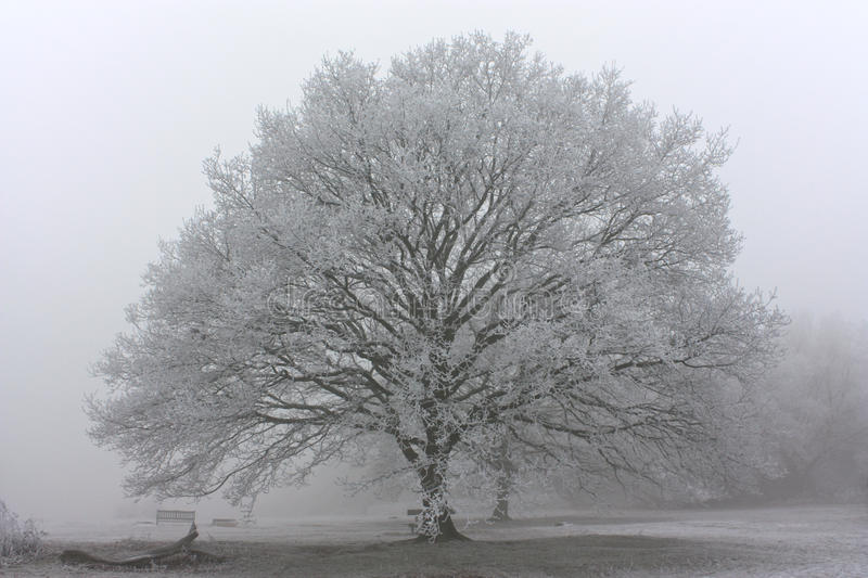 Morgenfrost in Großbritannien stockfotografie