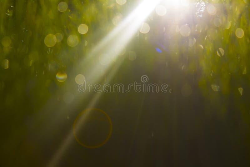 Morgengras stockbild