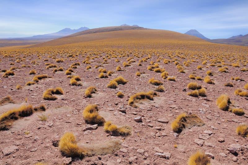 Morgenlandschaft in Atacama-Wüste lizenzfreie stockfotografie