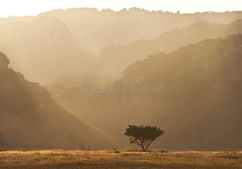 Morgenlandschaft mit Baum und Felsformationen madagaskar stockfotografie