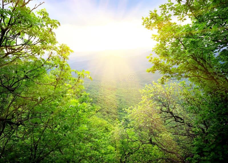 Morgenlicht stockbilder
