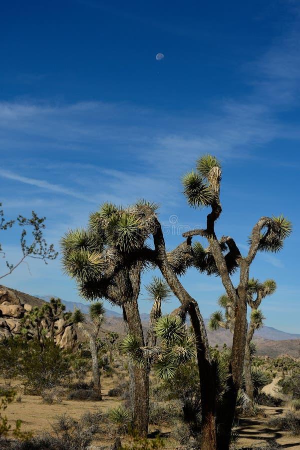 Morgenmond über Wüstenlandschaft stockbilder