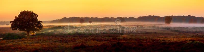 Morgennebel über der Heide lizenzfreies stockbild