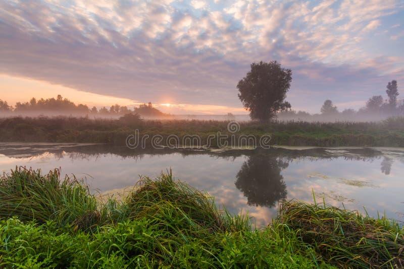 Morgennebel über einem kleinen Fluss stockfotografie