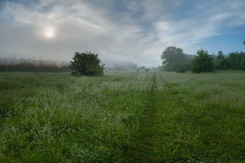 Morgennebel über grüner Wiese stockfoto