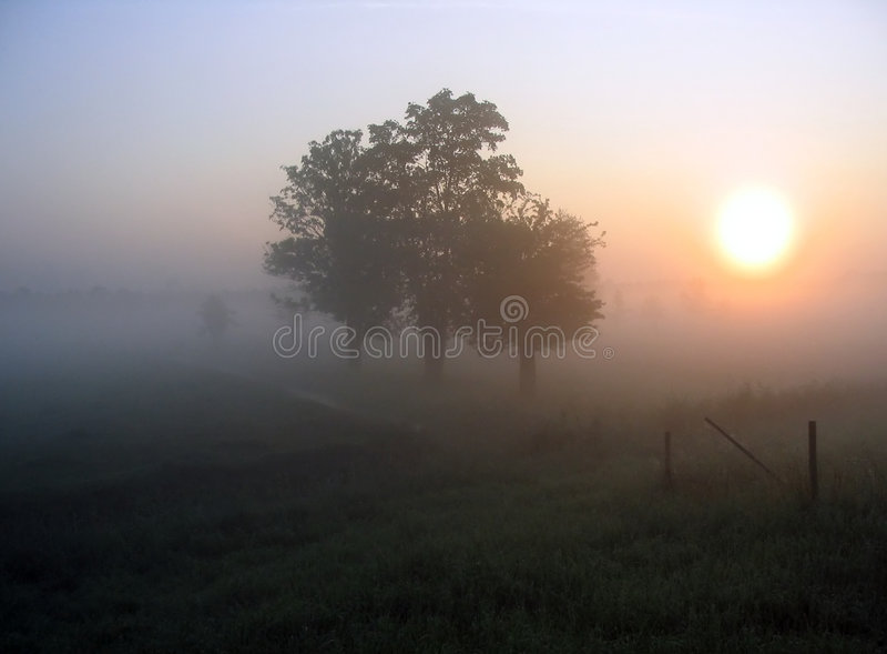 Morgennebel stockfotografie