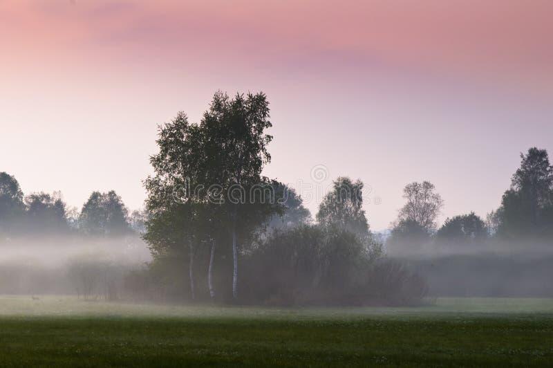 Morgennebel auf geöffnetem Feld stockfotografie