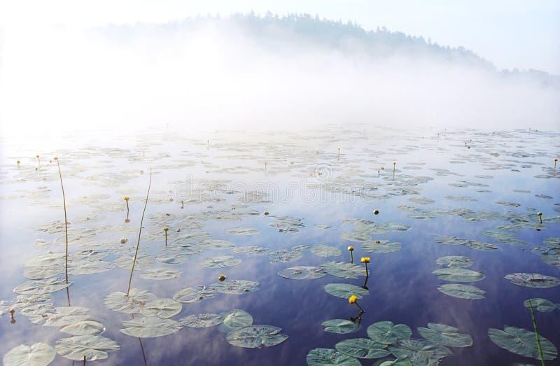 Morgennebel auf wildem Waldsee in Karelien stockbild